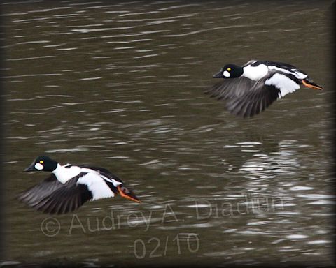 Aad-CommonGoldeneye-2-1-10-9108