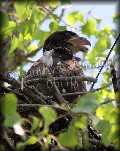 Aad-Eaglet-5-19-10-4296