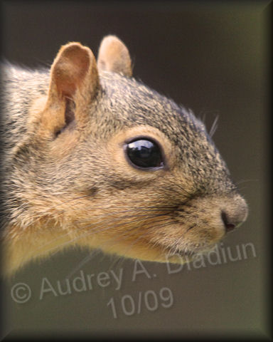 Aad-Squirrel-10-01-09-4506