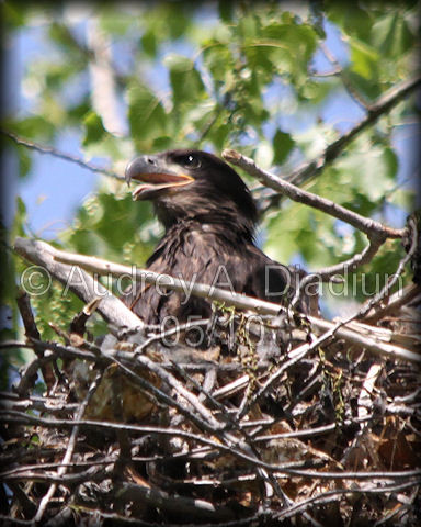 Aad-Eaglets-5-19-10-4217