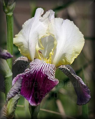 Aad-Iris-5-23-10-4821