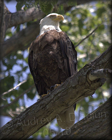 Aad-Eagle-Mom-5-30-10-6001
